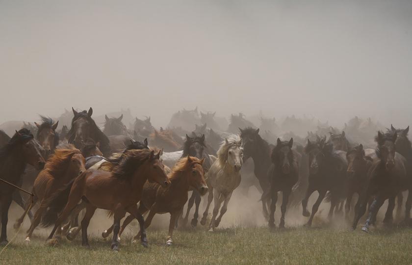 索尼全画幅微单Alpha 7R IV记录那达慕与游牧民